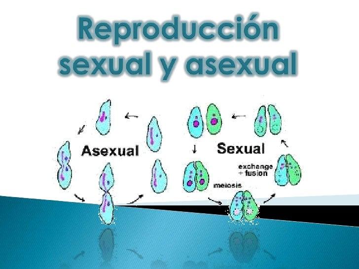 Reproduccion sexual y reproduccion asexual diferencias