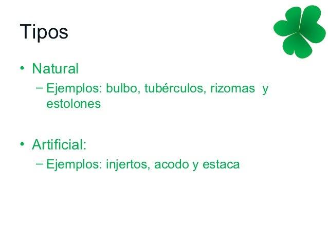 Ejemplos de plantas por reproduccion asexual artificial