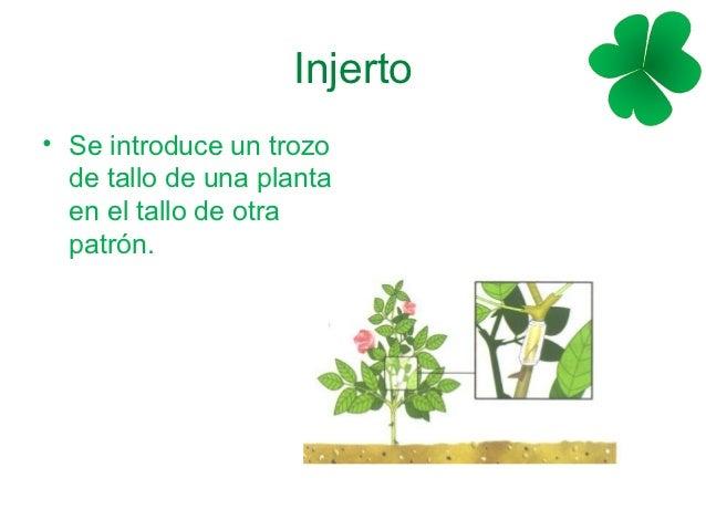 Reproduccion asexual de las plantas por estacas morelos