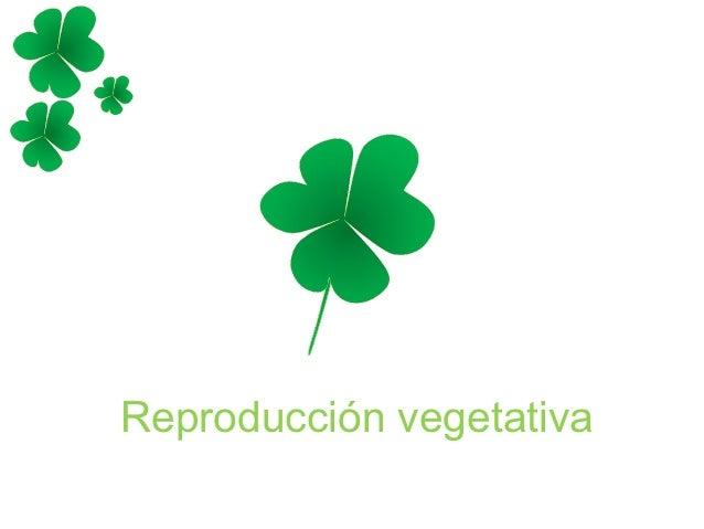 Reproducción vegetativa