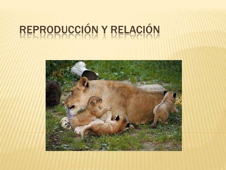 Reproducción y relación<br />