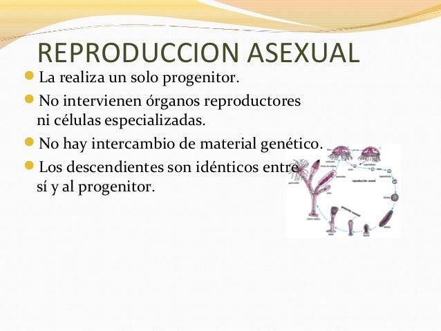 Reproduccion asexual concepto corto