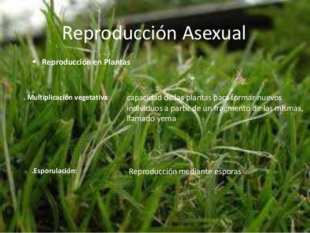 Fragmentation reproduccion asexual pdf download