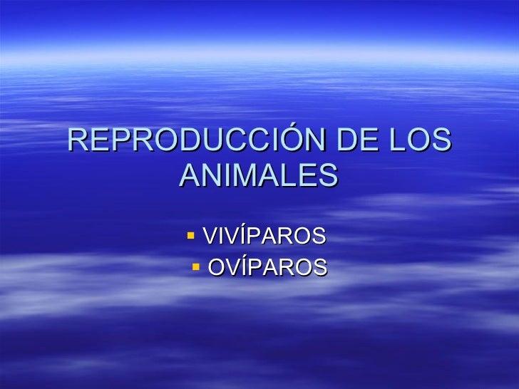 REPRODUCCIÓN DE LOS ANIMALES <ul><li>VIVÍPAROS  </li></ul><ul><li>OVÍPAROS </li></ul>