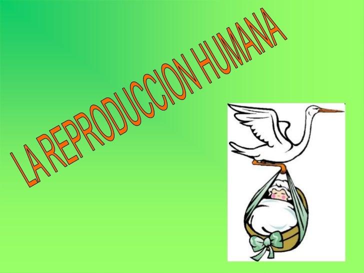 Reproducción humana Pablo y Marina