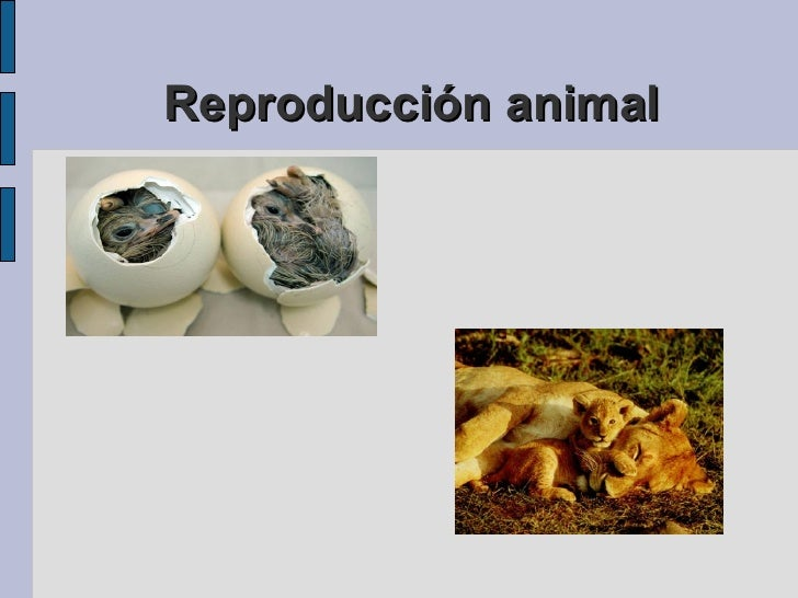 Reproducción animal