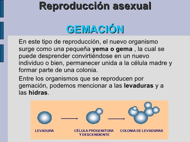Videos de reproduccion asexual fision