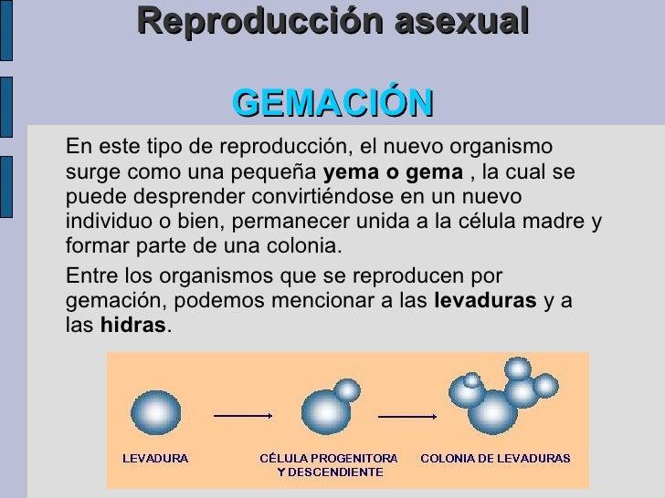 Resultado de imagen de reproduccion por gemación