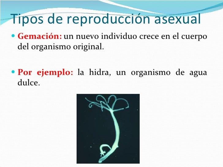 Reproduccion asexual en plantas gemacion hidra
