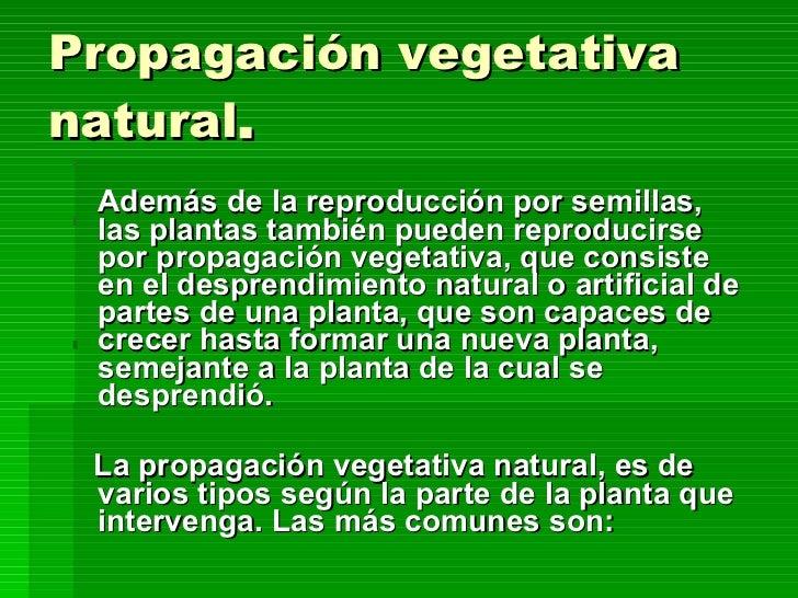 Reproduccion vegetativa asexual natural