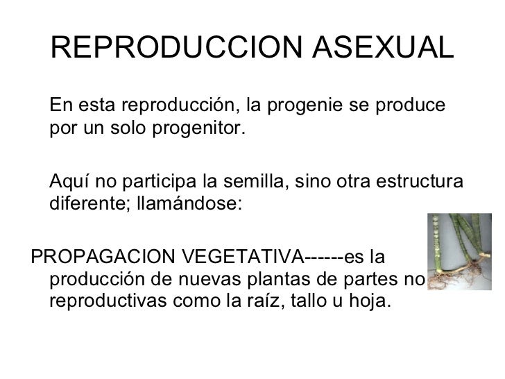 Propagacion vegetativa asexual budding