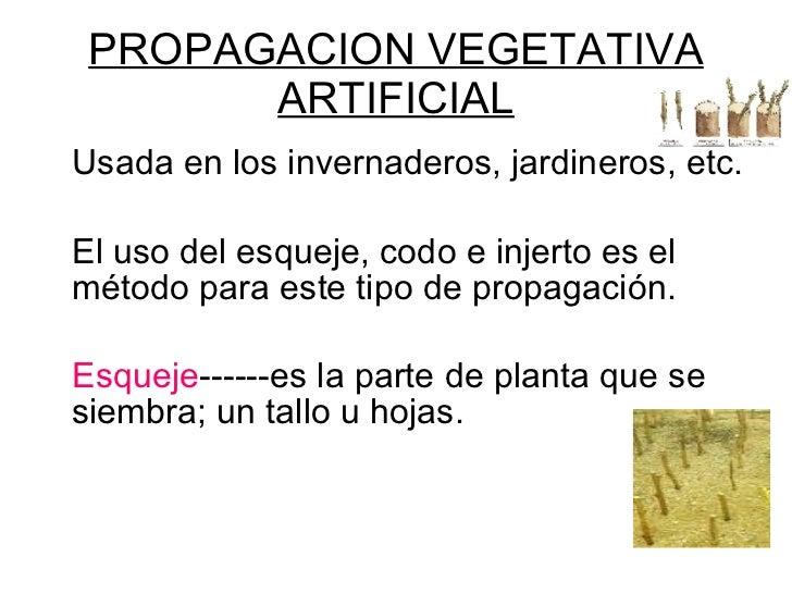 Tipos de reproduccion asexual en plantas artificiales