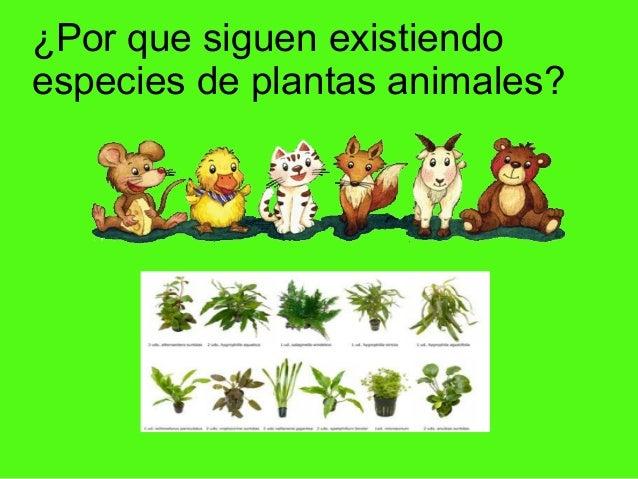 ¿Por que siguen existiendo especies de plantas animales?