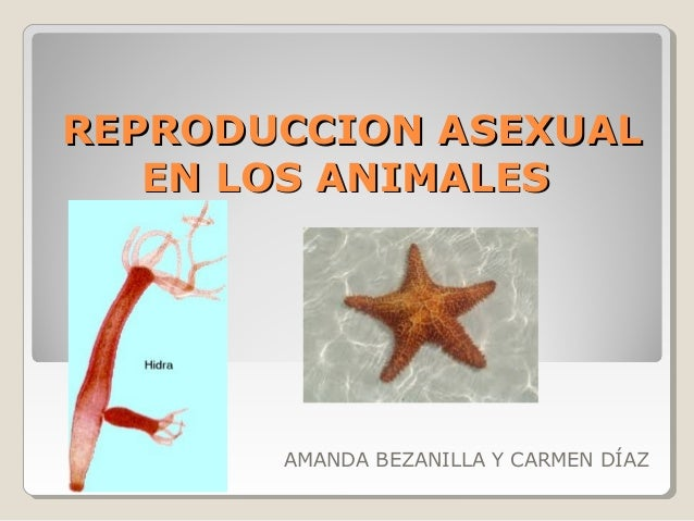 Reproduccion Asexual En Los Animales