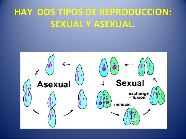 Reproduccion asexual definicion y tipos
