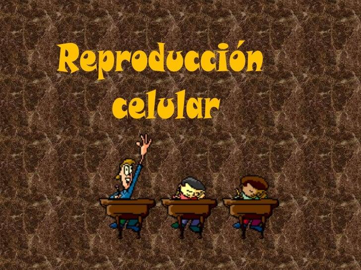 Núcleo                 Ciclo                Celular                MitosisReproducción  Celular                 Datos     ...