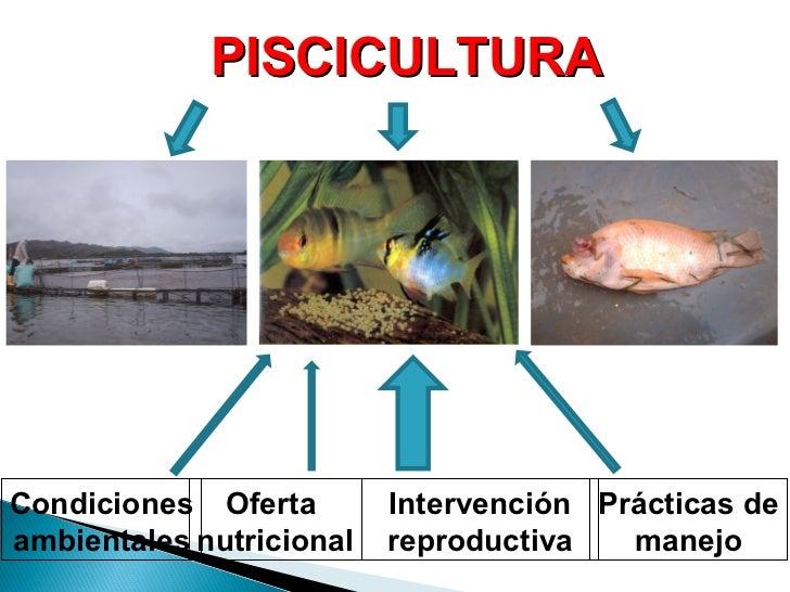 Reproduccion de peces for La reproduccion de los peces