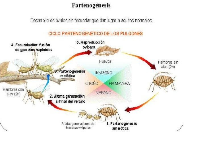Reproduccion en animales for La reproduccion de los peces