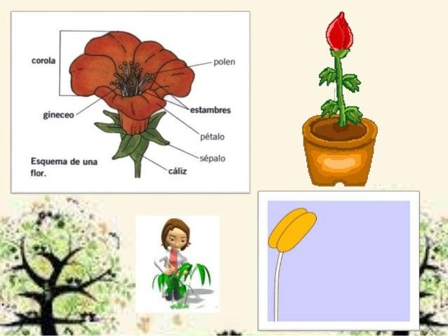 Celula reproductora asexual plants