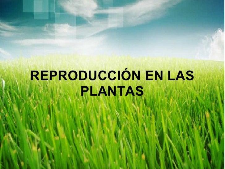 REPRODUCCIÓN EN LAS PLANTAS