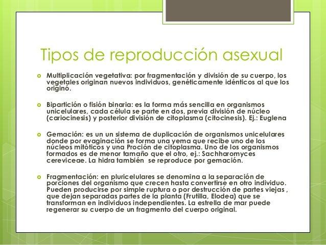 Fragmentation definicion reproduccion asexual de las plantas