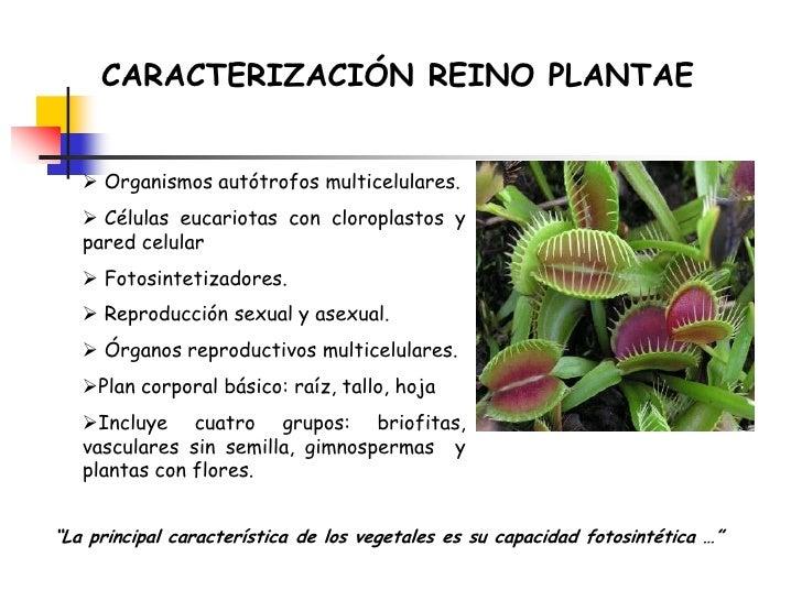 Plantas vasculares sin semilla reproduccion asexual