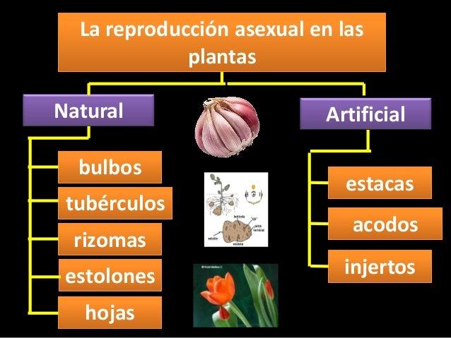 Fotos de reproduccion sexual y asexual de las plantas
