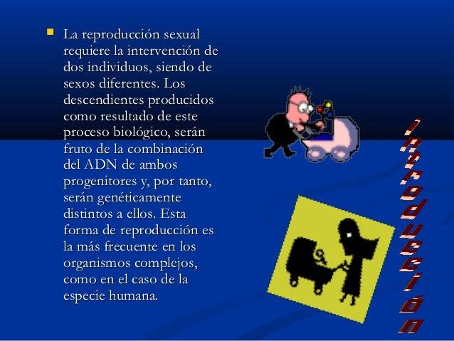    La reproducción sexual    requiere la intervención de    dos individuos, siendo de    sexos diferentes. Los    descend...