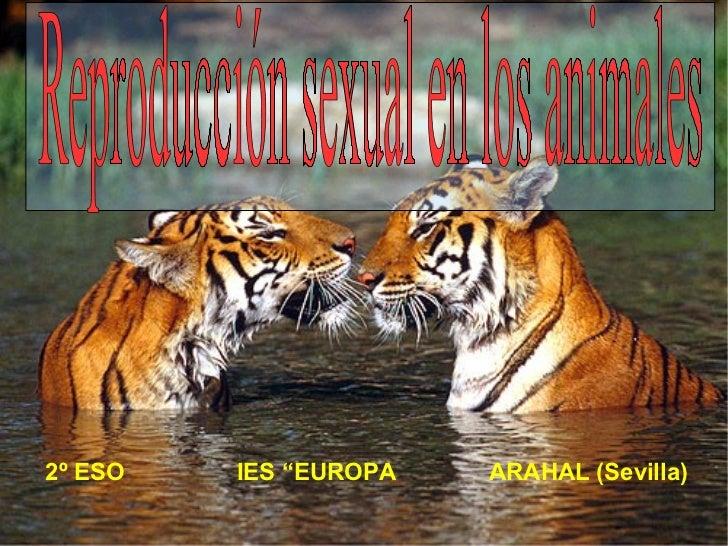 """2º ESO  IES """"EUROPA  ARAHAL (Sevilla) Reproducción sexual en los animales"""