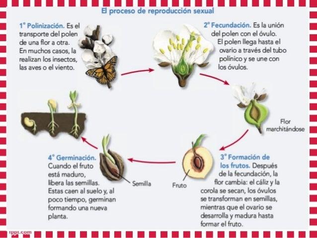 Imagenes de reproduccion sexual de las plantas