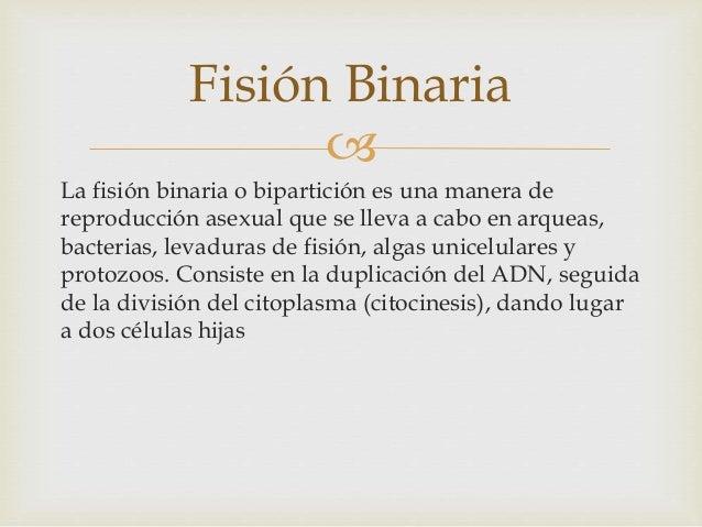 Division binaria reproduccion asexual definicion