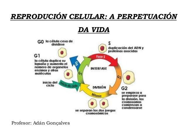 REPRODUCIÓN CELULAR: A PERPETUACIÓN DA VIDA Profesor: Adán Gonçalves