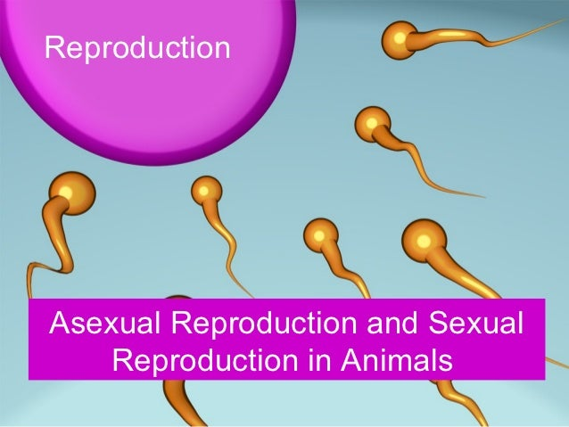 Reproduction 1 goal 2 methods of asexual reproduction