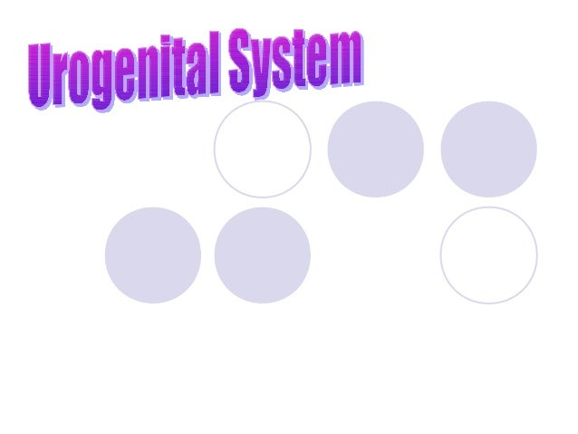 Urogenital System Term refers to the Excretory System and Reproductive Systems Excretory System sometimes called Urinary...