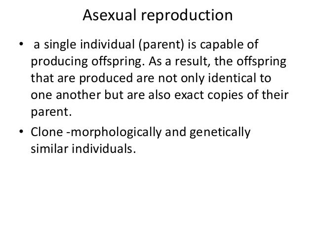 Asexual reproduction in amoeba processors
