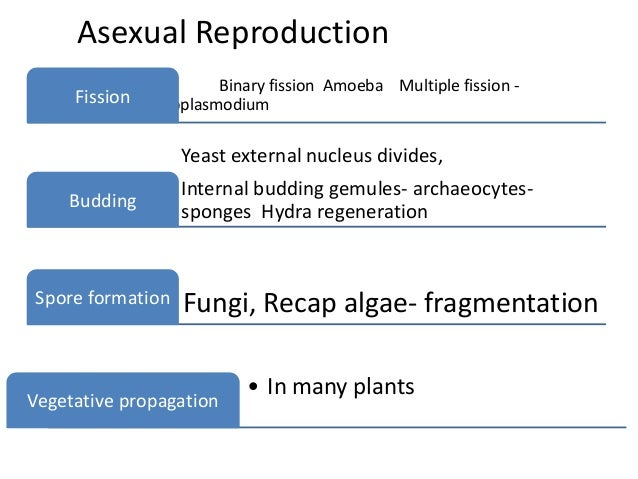 Asexual reproduction definition example synonyms