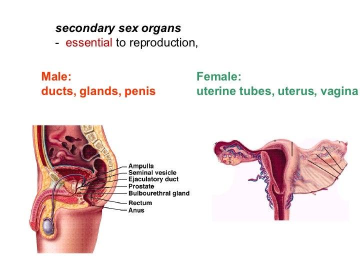 Dominant sex organ