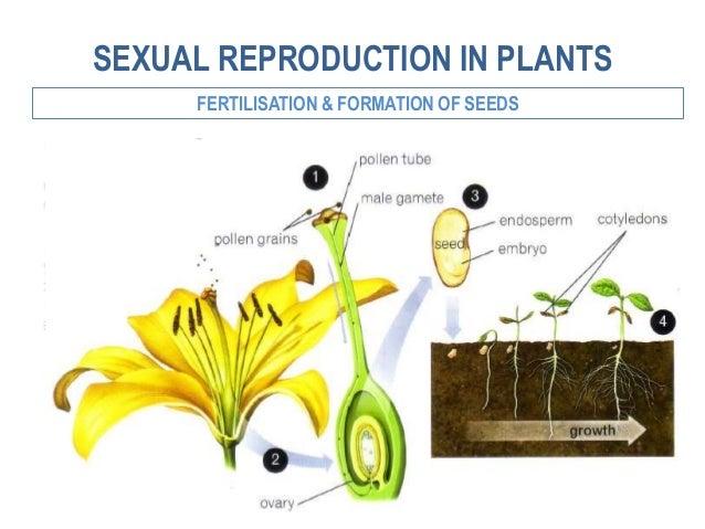 Escision o fragmentation asexual reproduction