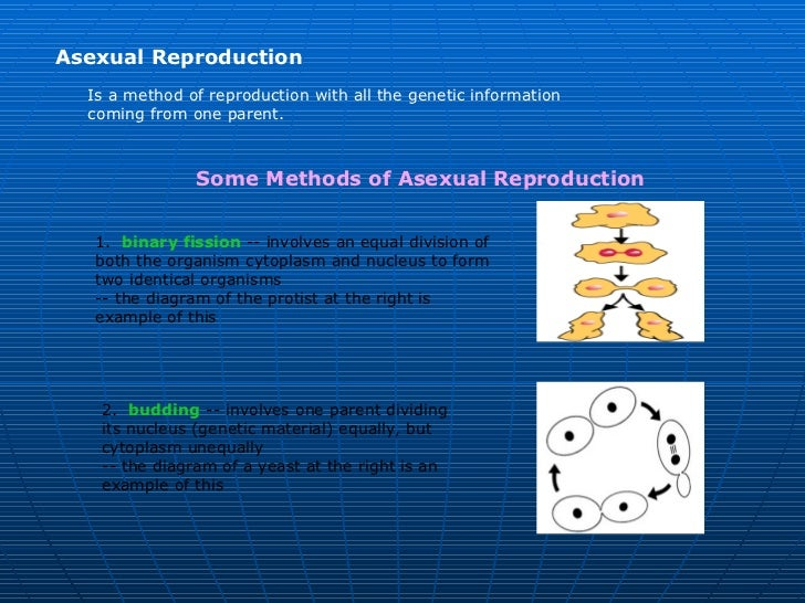 Asexual Reproduction  Is a method of reproduction with all the genetic information  coming from one parent.               ...