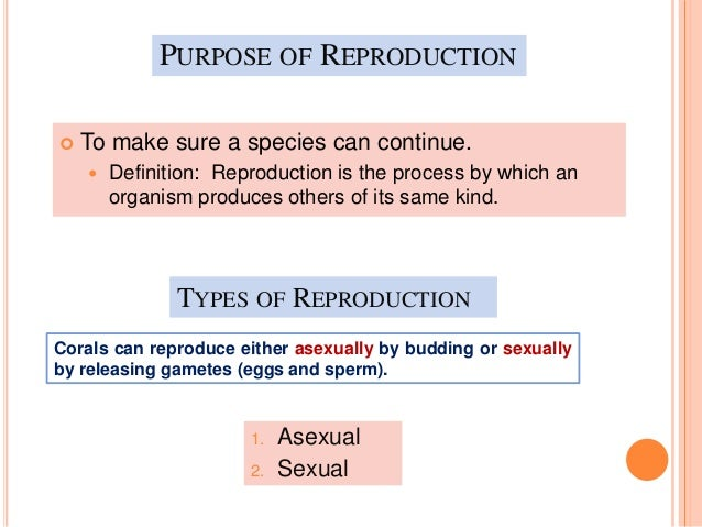 Vijay asexual definition