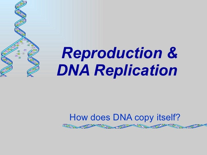 In asexual reproduction does dna replicate
