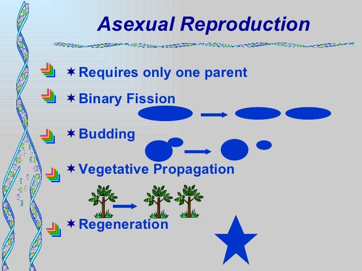 Replication of dna molecules occurs during asexual reproduction