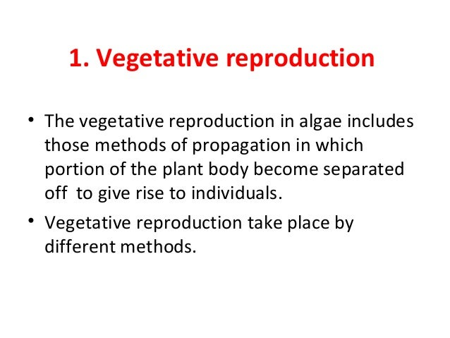 Advantages of asexual reproduction in algae and plants