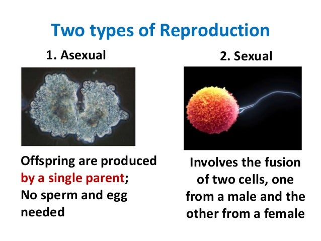 types of reproduction The results clearly indicate that the swedish populations of p infestans are  influenced by sexual reproduction the facts that both mating types are found all.