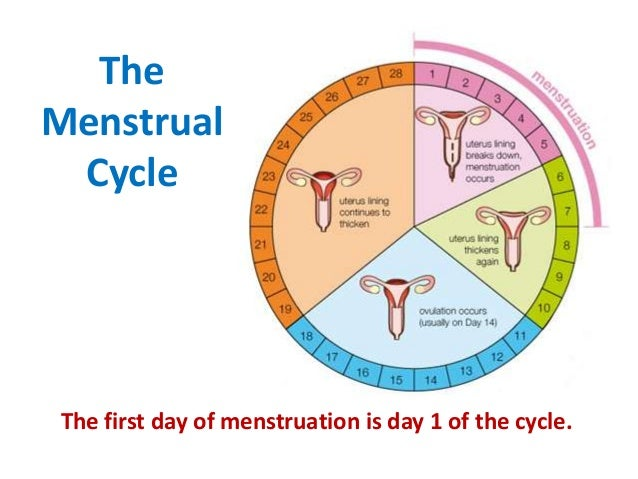 four stages of menstrual cycle
