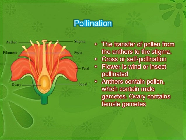 Self fertilization sexual reproduction