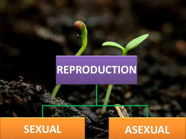 Asexual reproduction in humans pdf converter