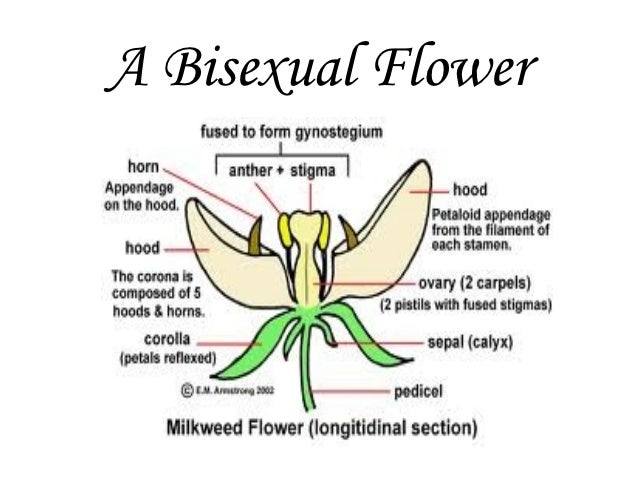 5 bisexual flowers