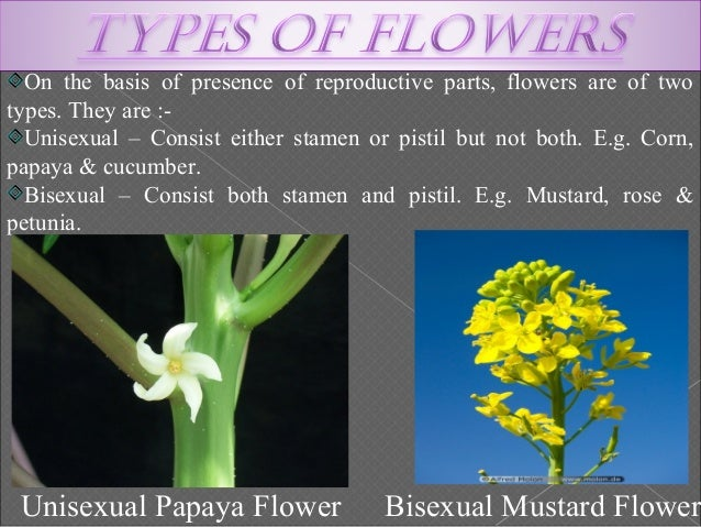 Unisexual flowers reproduction