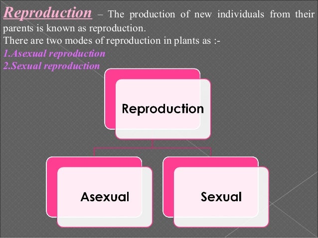 a short description of how photosythesis processes in plants Photosynthesis plants absorb sunlight and turn that energy into food the process is known as photosynthesis  this is a compound word made up of photo (which means light) and synthesis (which means to put together.